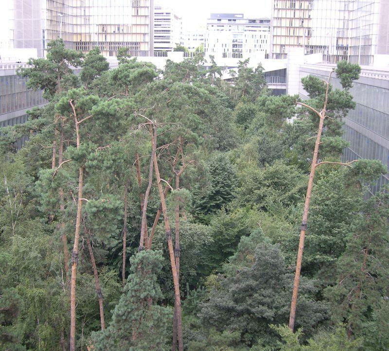 SadTrees